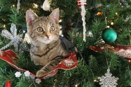 Safety Precaustions To Take To Keep Your Pet Safe During The Christmas Holiday