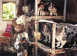 Stop Puppy Mills! – The Impact