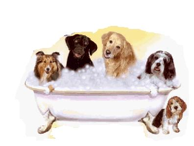 Importance of Pet Grooming to an Animals Health