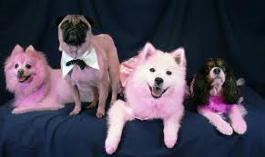 Dogs Get Breast Cancer Too!