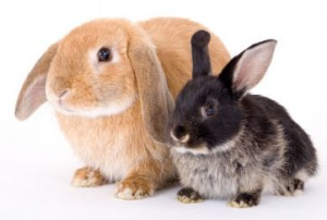 Rabbits Need Veterinary Care Too!  Some Signs Of Illness To Look Out For In Your Pet Rabbit.