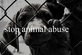 Combating Animal Abuse