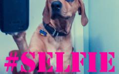 Respect Your Selfie