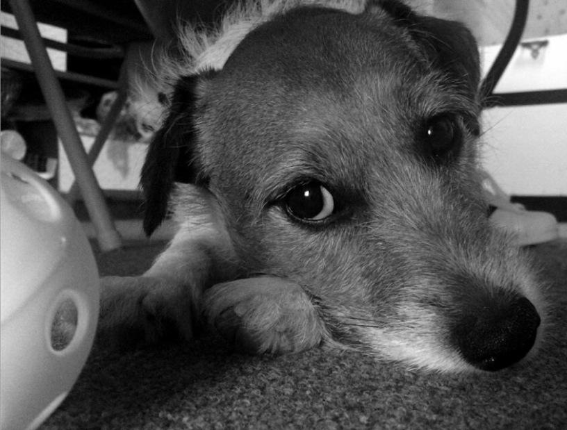 12 Signs You Have ODD (Obsessive Dog Disorder)