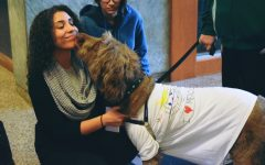 Therapy Dogs Relieve Stress at Mercy College