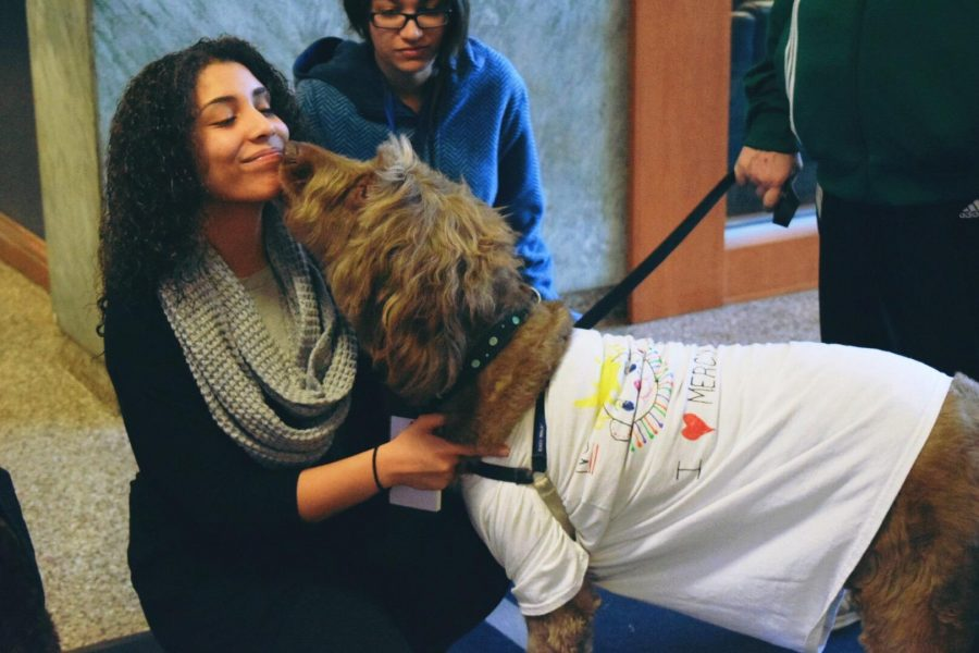 Therapy+Dogs+Relieve+Stress+at+Mercy+College