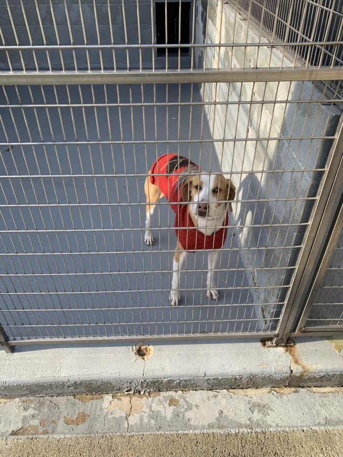 Adopting+Is+The+Best+Way+To+Find+The+Pet+You%27re+Looking+For