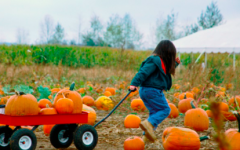 10 Socially Distanced Fall Activities