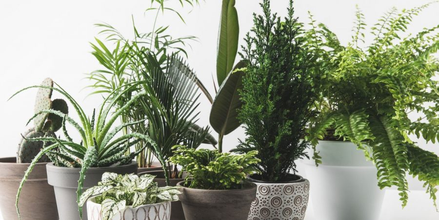 Top 10 Easiest Houseplants To Own