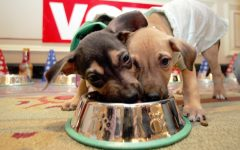 Toxic Foods to Avoid Giving Your Pet